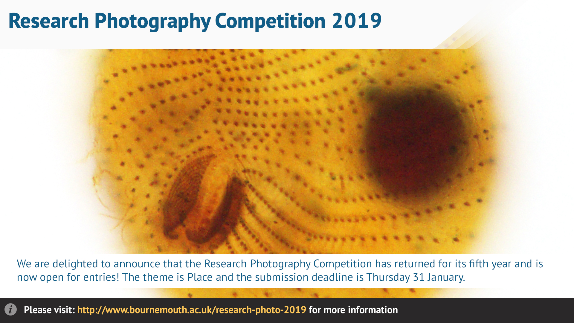 Research-photography-comp-2019.jpg