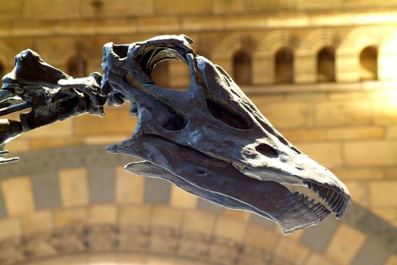 Dippy dinosaur web image