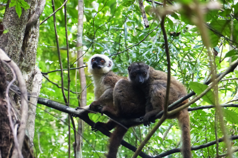 BU research has helped to preserve Madagascar's plants and wildlife