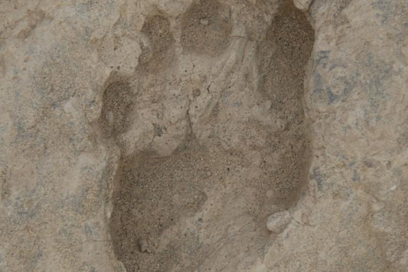 Forensic Footprint