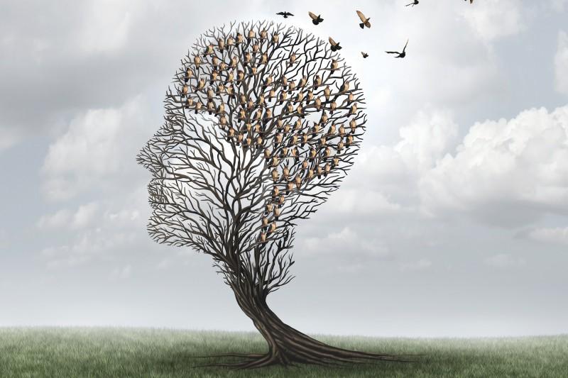 Birds tree illustration