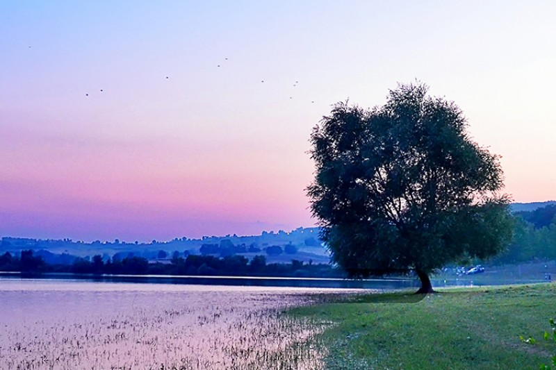Image of a tree by a lake