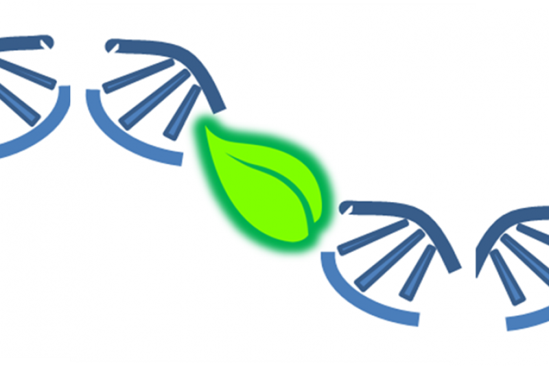 ECO-CODING: A Centre for DNA Meta-barcoding Ecology