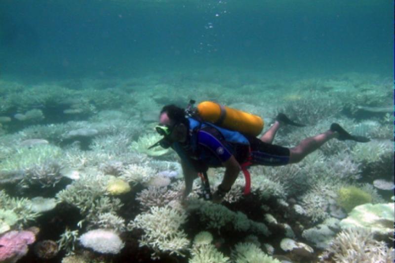 Fieldwork being undertaken in the ocean