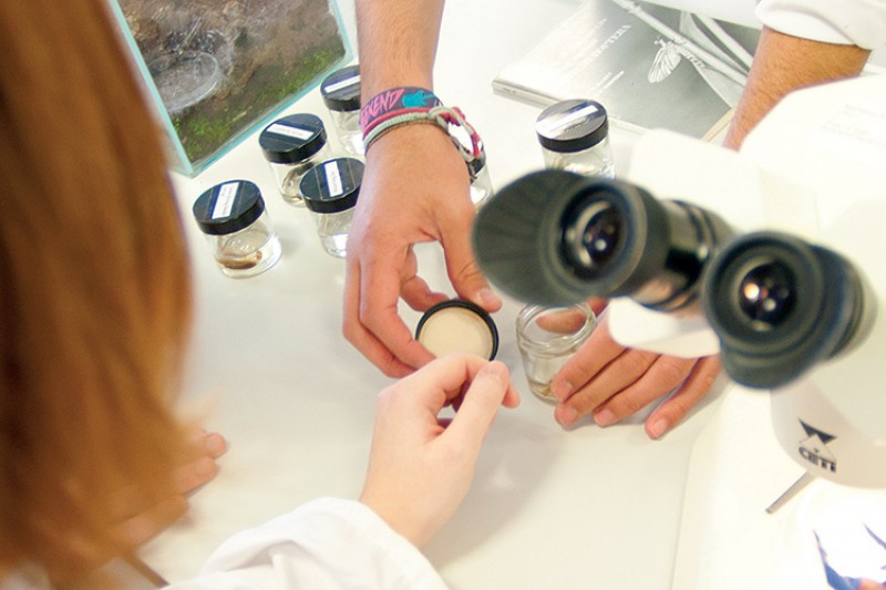 Microscope, hands and sample jars