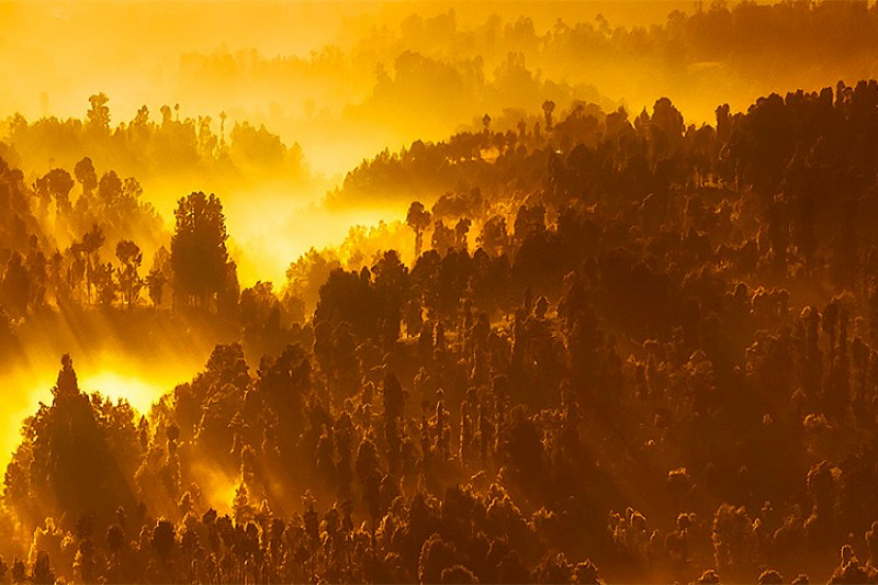 Image of a sunrise over an Indonesian forest
