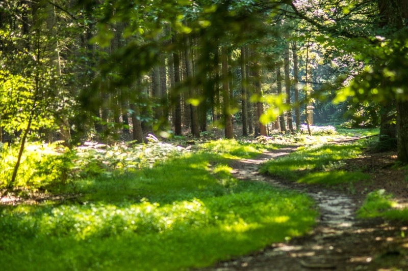 New Forest conservation