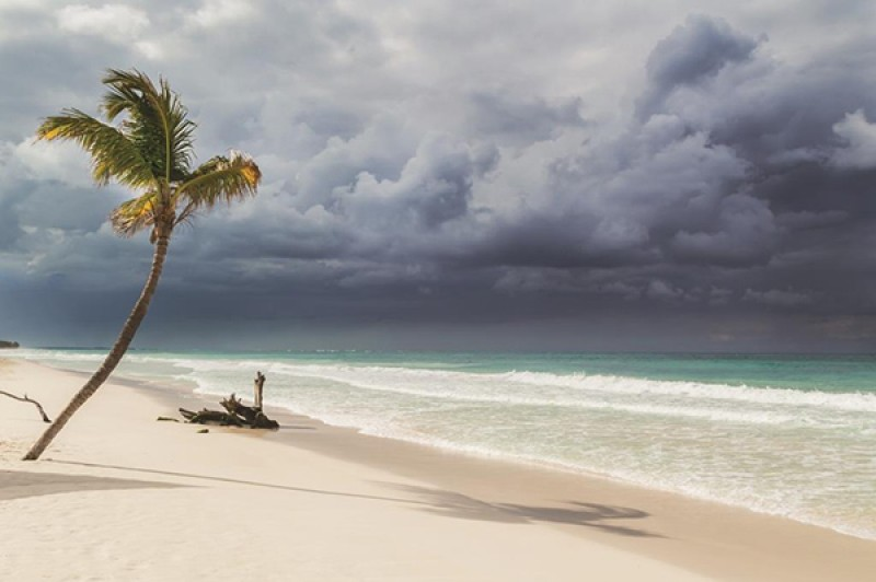 Palm tree on a beach in stormy weather
