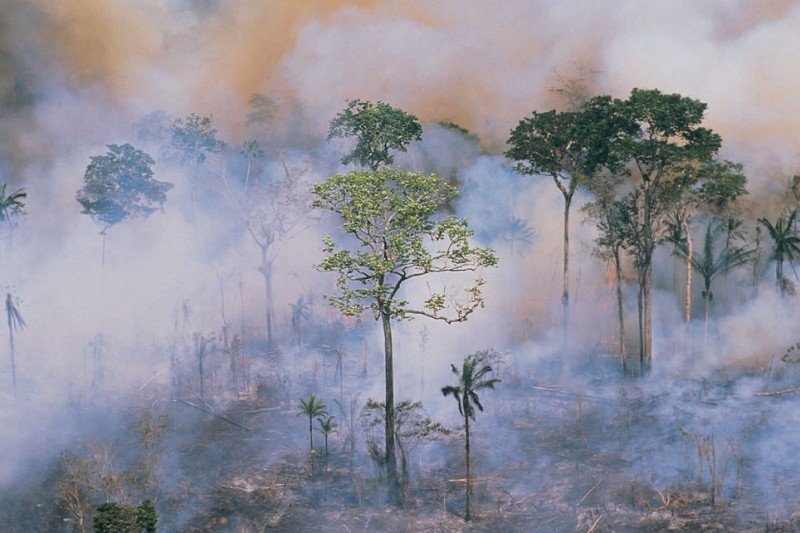 Risks to trees in the tropical andes