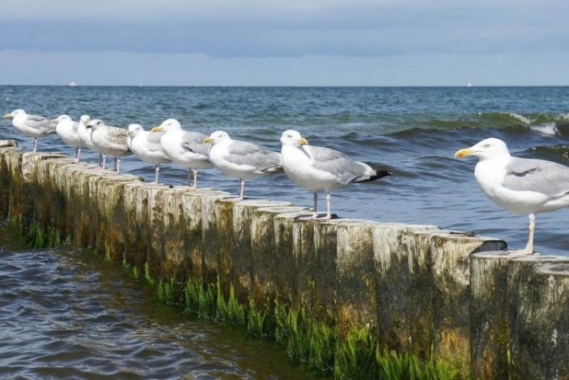 Seagulls on groyne