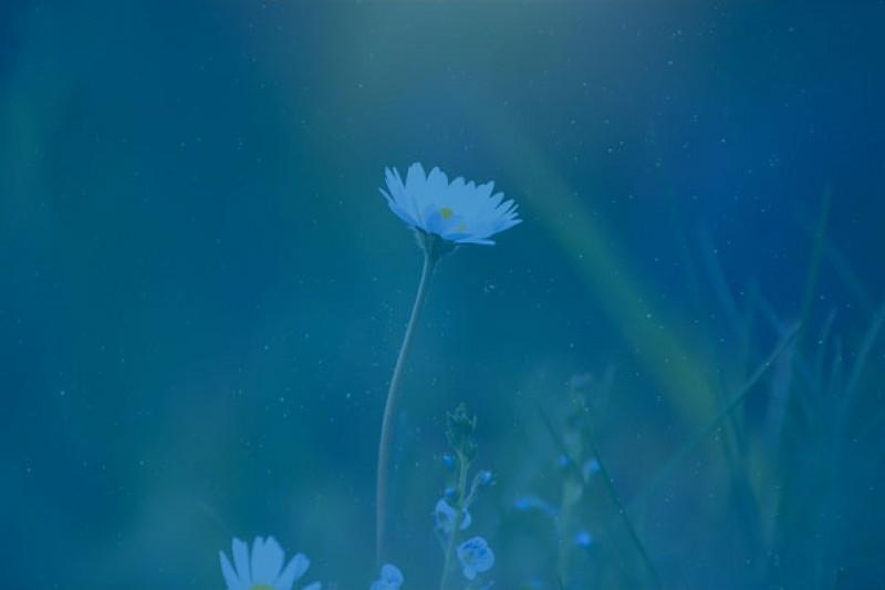 A daisy in a field