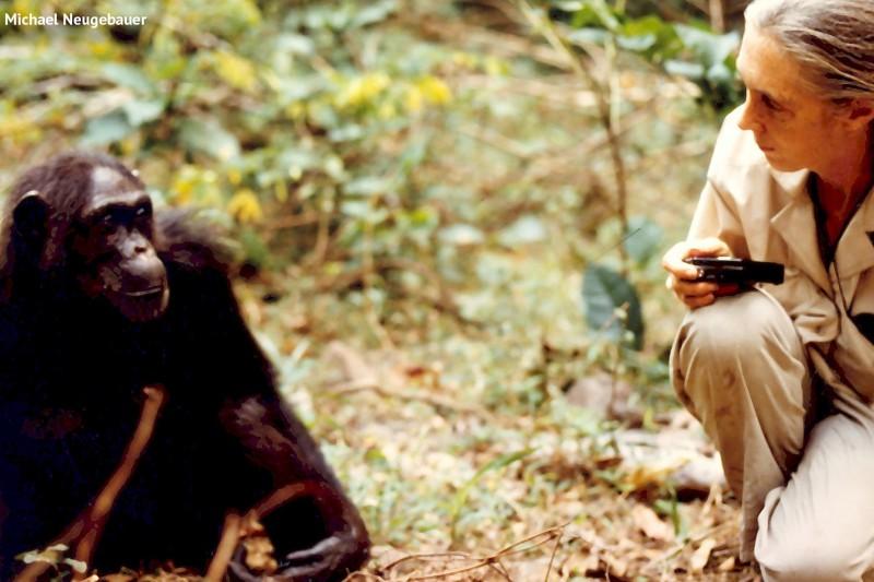 Jane Goodall DBE - IMSET event only