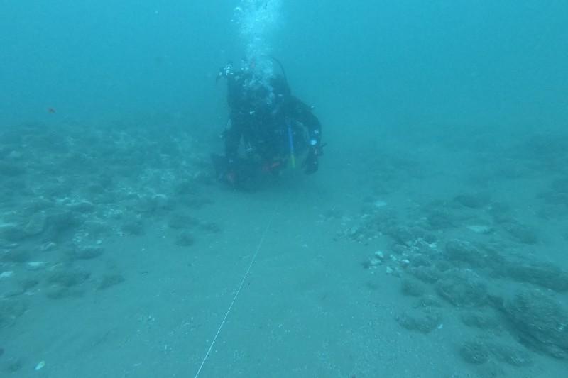 Cruise ship scarring diver