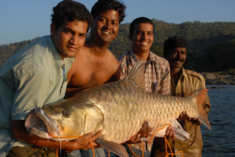 Hump-backed mahseer 1