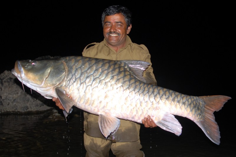 Hump-backed mahseer 2
