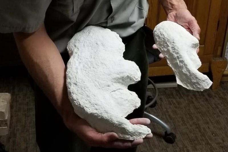 Plaster cast footprints