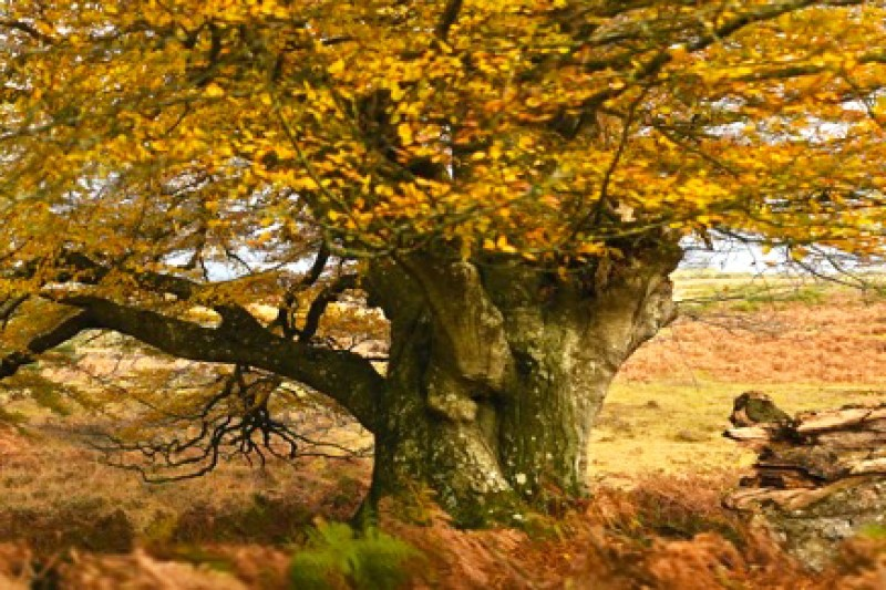 Trees of the New Forest - art exhibition