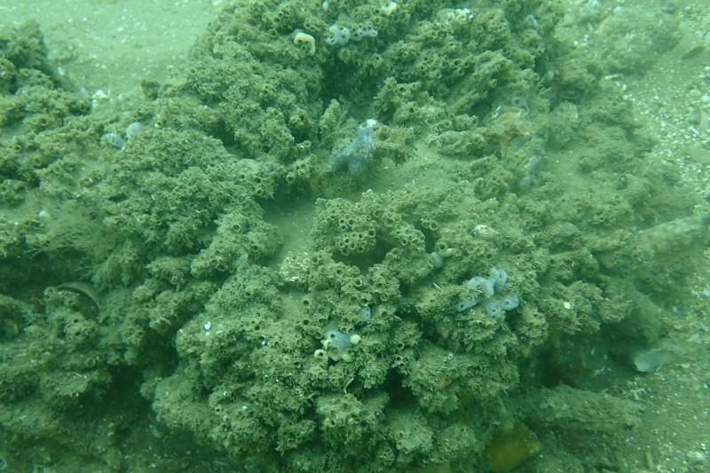 Sabellaria reef potential damage