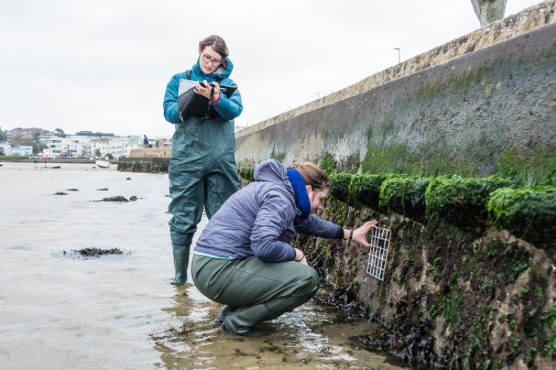BU researchers examining artificial rockpools in Poole Harbour