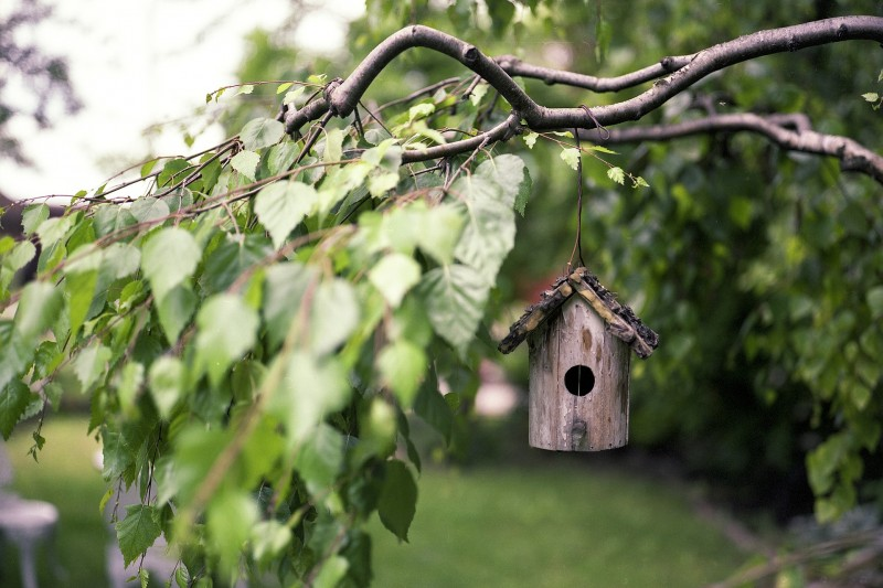 A birdhouse hanging from a tree