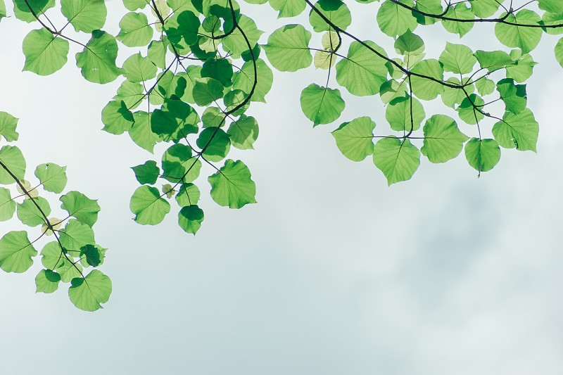 tree branches with green leaves